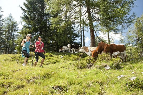 Sommerurlaub in Abtenau, Nordic Walking & Laufen