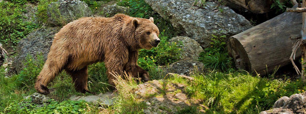 Ausflugsziele vom Landhaus Oberlehen aus - Zoo Salzburg